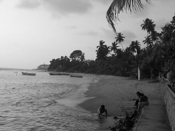 Kokospalmen-Sri-Lanka