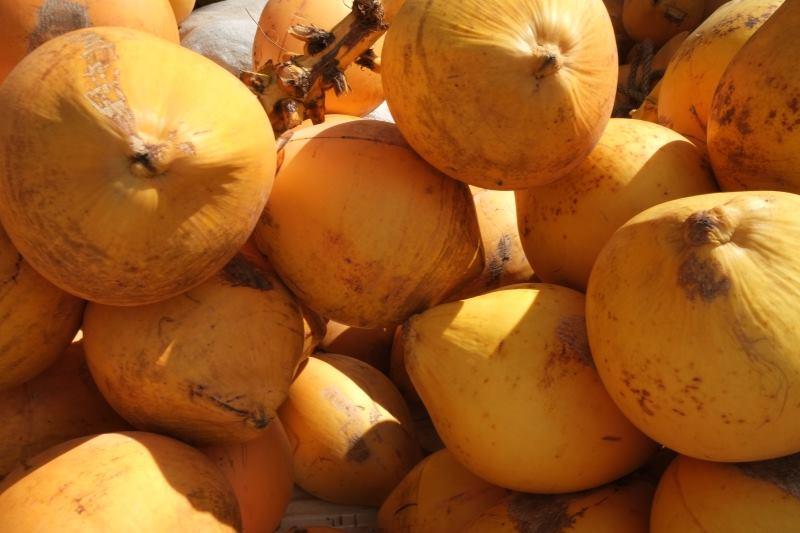 Die Königsklasse der Kokosnüsse –  die King Coconut