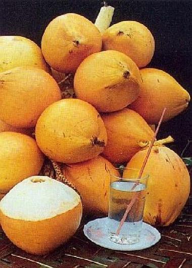 Die Königsklasse der Kokosnüsse – die King Coconut   KULAU ...