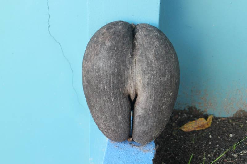 Kurioses aus der Kokosnusswelt – Eine Zusammenfassung