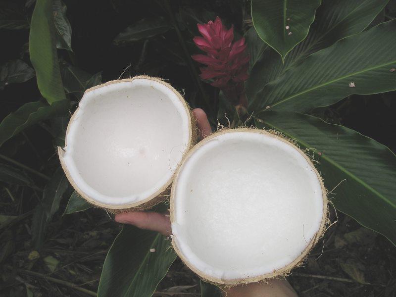 offene-kokosnuss-hand