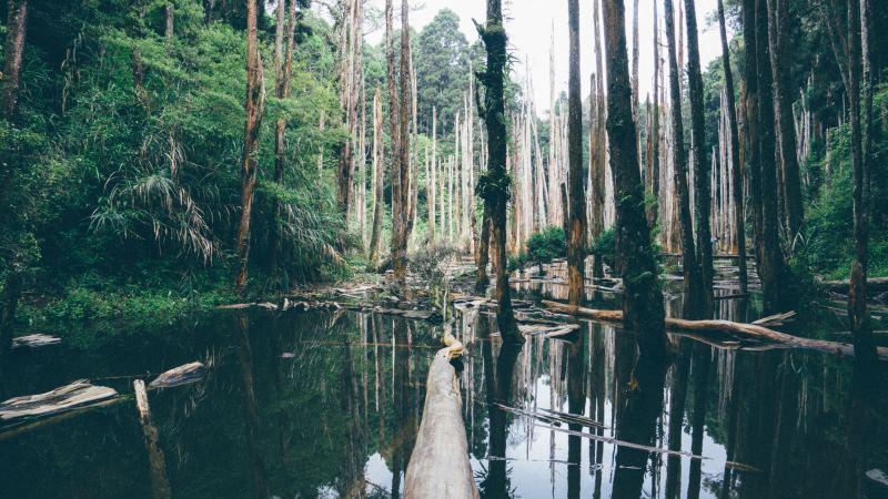 Monokultur oder Mischkultur? Die Folgen des Anbaus in Monokulturen in Regenwaldgebieten
