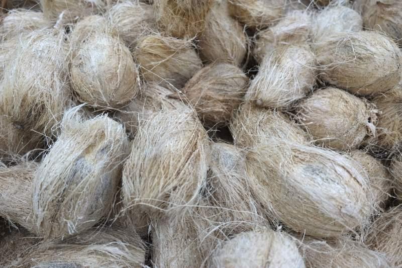Kokosnussfasern als Polstermaterial