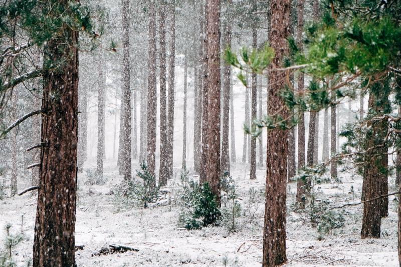 Adventszeit ist Kokoszeit – Leckereien verfeinert mit Kokosöl