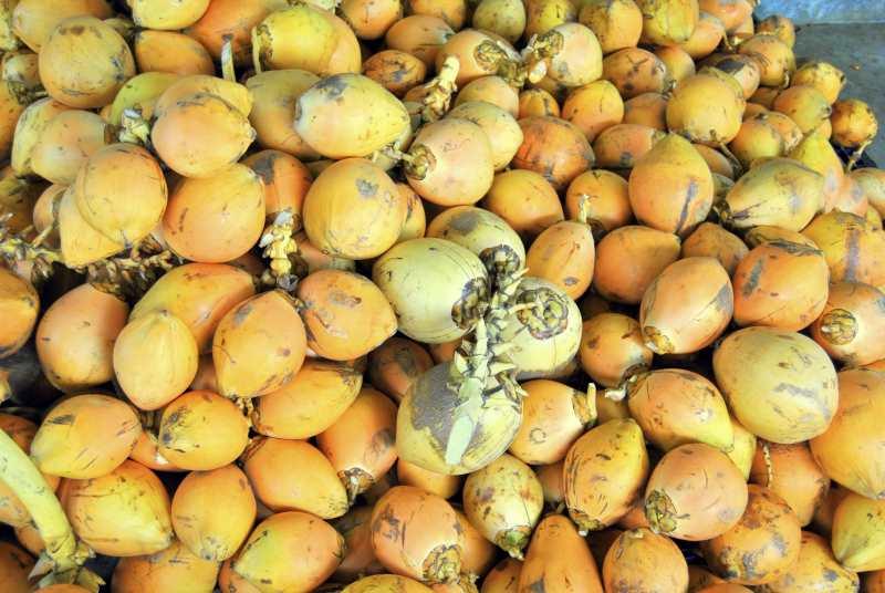 Wie viele Kokosnüsse braucht man für Kokoswasser, Kokosöl, Kokosmus