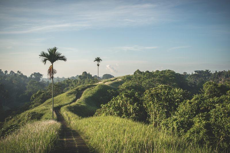 Kokosöl ist nachhaltiger als Palmöl