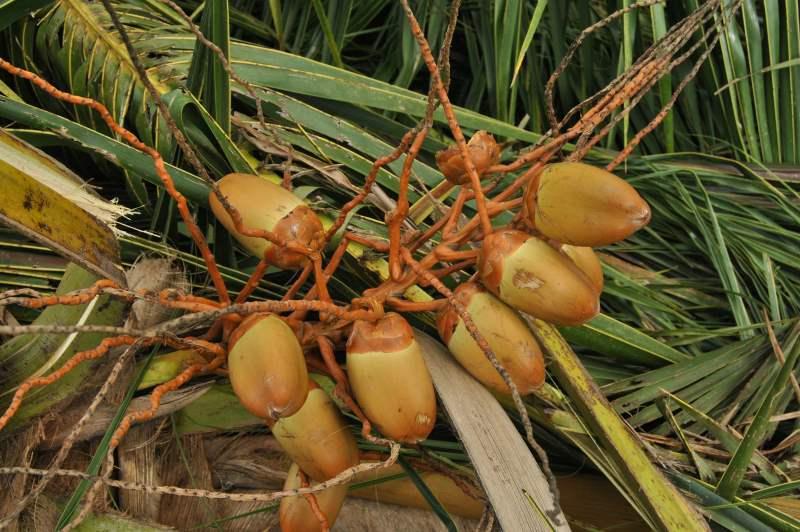 Vorgestellt:  Bio-Kokoscurry von KULAU