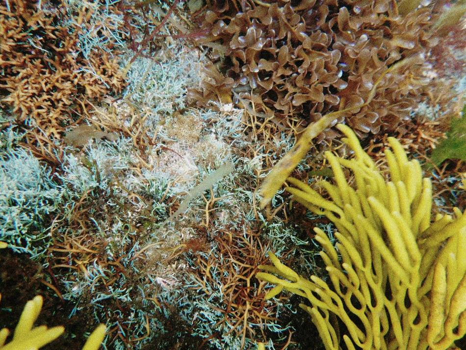 Farbige Algen unterwasser