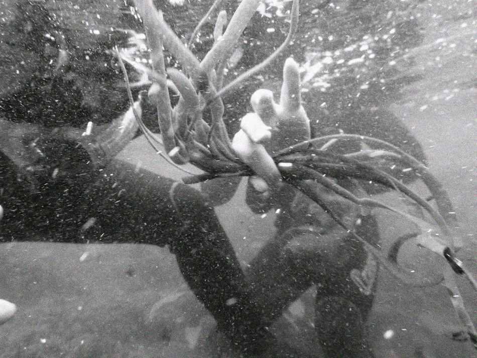 Josefine Staats Algen tauchen