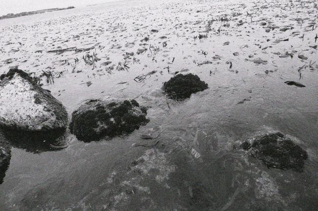 meer-bio-algen