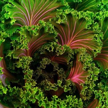 Warmer Salat mit Grünkohl und Kokos