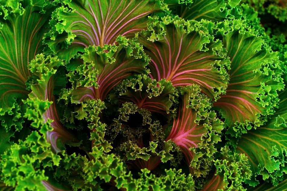 Warmer Salat mit Grünkohl und Norisnacks