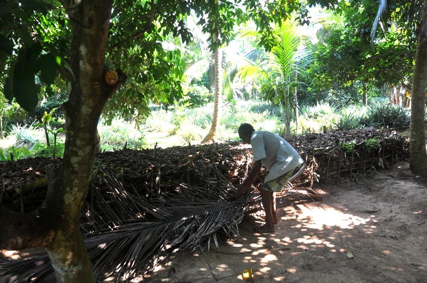kokosblaetter-kompostieren