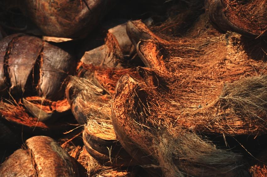 Fasern von Kokosnussschalen