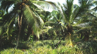 Janna von KULAU zu Besuch in Sri Lanka