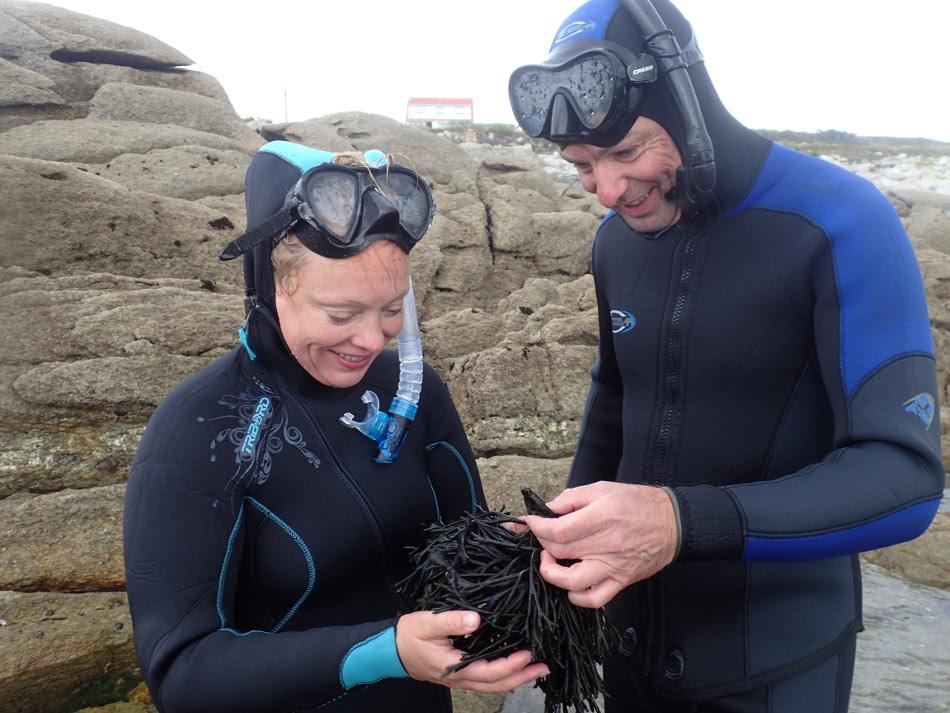 KULAU Josefine Staats und Markus Lind beim Algen ernten