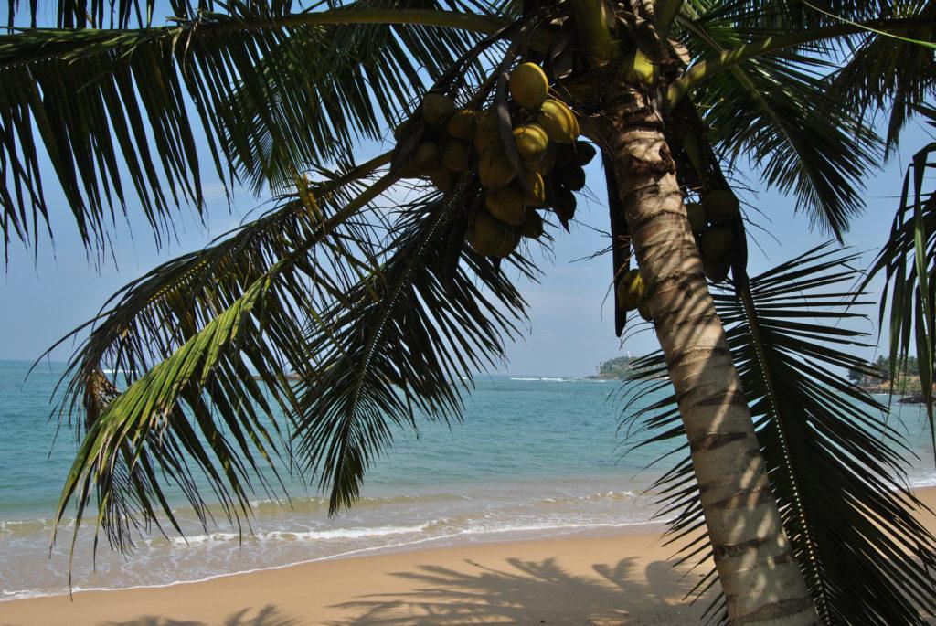 Die Top 5 Kokosnussprodukte für diesen Sommer