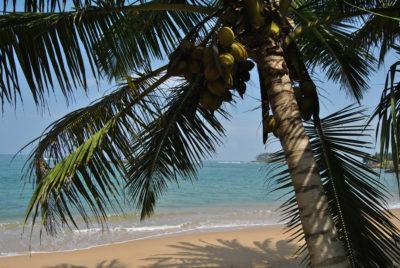 Die Top 5 Kokosnussprodukte für den Sommer- Gastbeitrag von HealthyHappy